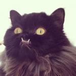 Monster, un gato con una dentadura de vampiro