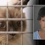 """Una mujer acusada de maltratar a 53 gatos metiéndolos dentro de """"Tuppers"""" en el maletero de su coche"""