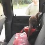 La reacción de una nutria al entrar por primera vez dentro de un coche