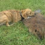 Un perro lamenta la muerte de un castor