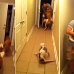 Una perra paralítica recibe a su dueño después de haber estado seis meses fuera de casa