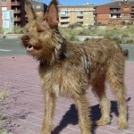 Piden ante el juez una pensión vitalicia para un perro que fue maltratado por su familiar en Teruel