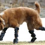 Naki'o, el primer perro biónico del mundo