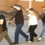 Tundra, la serpiente pitón de 120 kilos que pasea por Gijón