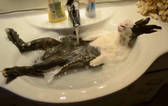 Un conejo dándose una ducha