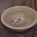 El gato que no quiere salir del baño caliente