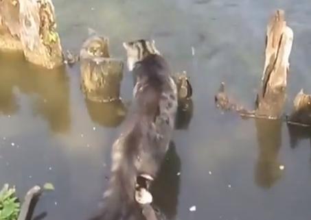 Los turistas tirando pan a los peces y un gato muy listo se aprovecha de la situación