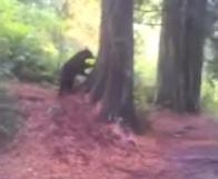 ¿Qué harías si vas tranquilamente con tu perro y te encuentras con un oso?