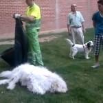 Gran indignación en Zaragoza después de que una policía local matara de un tiro a un perro que iba suelto por la calle