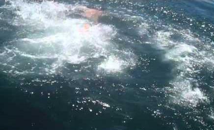 Salta encima de un tiburón desde su barco
