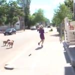 Suelta a los perros para que ataquen a la reportera