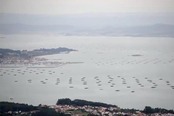 ¿Por qué el mejillón de Galicia es tan bueno y tiene tanta calidad?