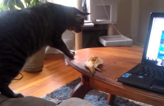 El ataque de la monda de plátano