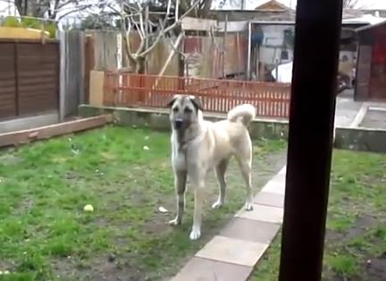Un perro corre al encuentro con su dueño al escuchar su voz 5 meses después