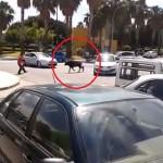 Un toro que se había escapado es derribado por varios peatones en Málaga