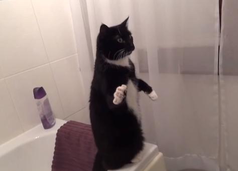 Gato posando frente al espejo