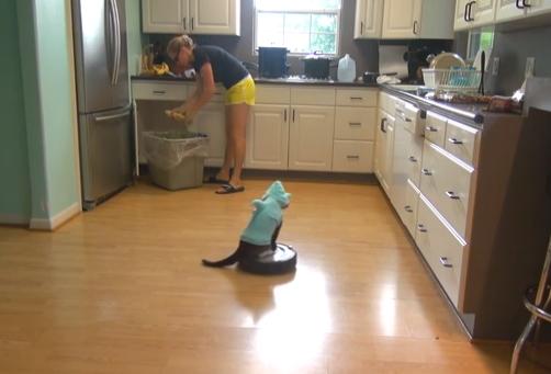 El gato tiburón es el encargado de limpiar el suelo de la cocina