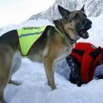 Un hombre murió congelado durante un temporal y su perro lo cuidó durante más de 20 días