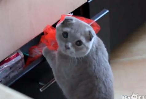 Reacción de un gato al ser pillado robando comida