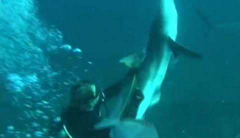 Esto es lo que le ha pasado por intentar ayudar a un tiburón