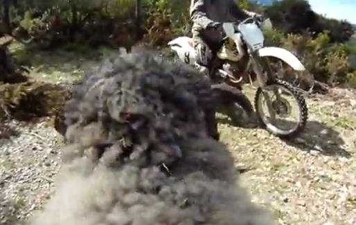El carnero y la moto (Segunda parte)