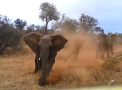 Un elefante embiste a un coche en el Parque Nacional Kruge de Sudáfrica