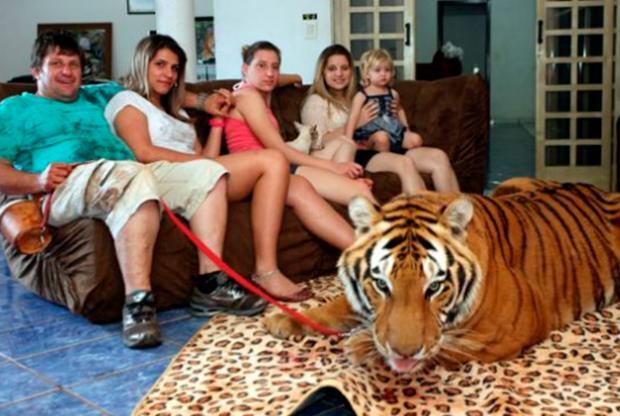 Una familia brasileña vive con 7 tigres