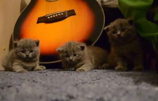 ¿Es posible hipnotizar a tres gatitos a la vez?