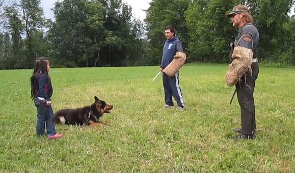 Así es como protege un pastor alemán a una niña de 5 años