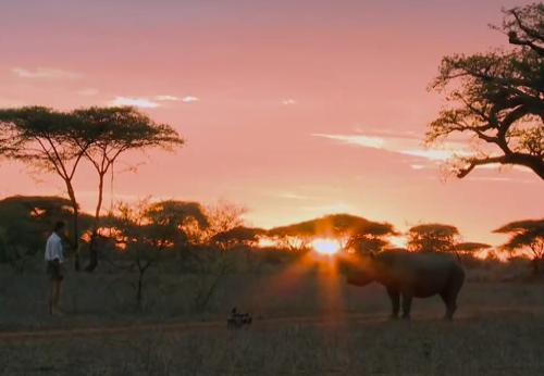 Jugarse el pellejo para grabar un buen plano de un rinoceronte