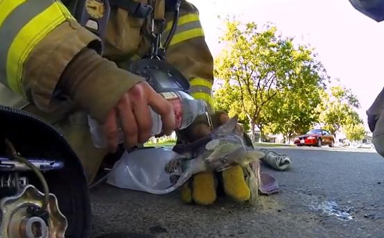 El rescate de un gato por parte de los bomberos visto en primera persona