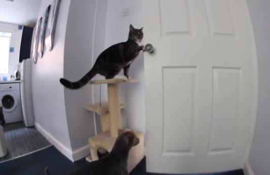 ¿Cómo salen el gato y el perro de la cocina?