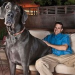 Muere George, el perro más grande del mundo