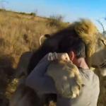 Abrazo a unos leones visto desde una cámara GoPro