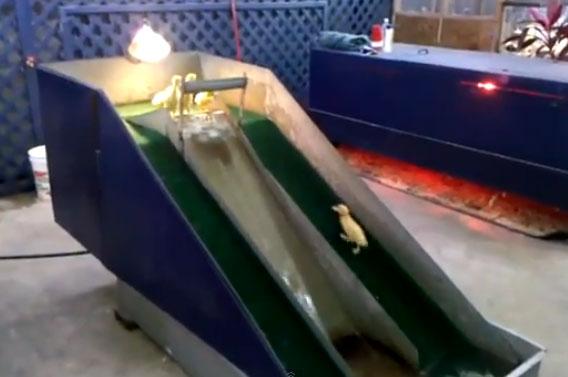 Parque acuático para patitos