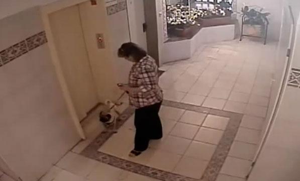 Un perro se salva por los pelos de morir en un ascensor