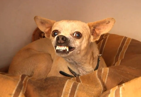 Un perro que no tiene muchas ganas de que nadie lo acaricie