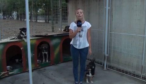 Un perro se la juega a la reportera en directo