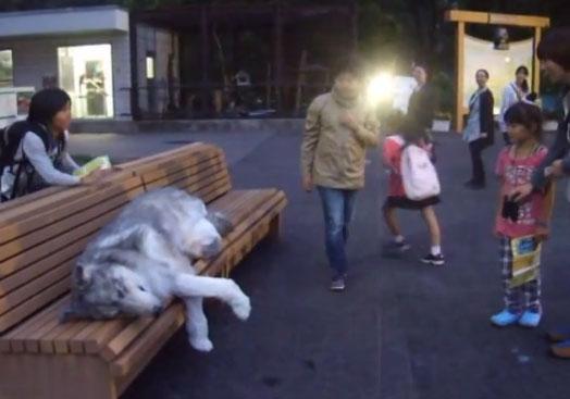 Increíble traje de lobo muy realista