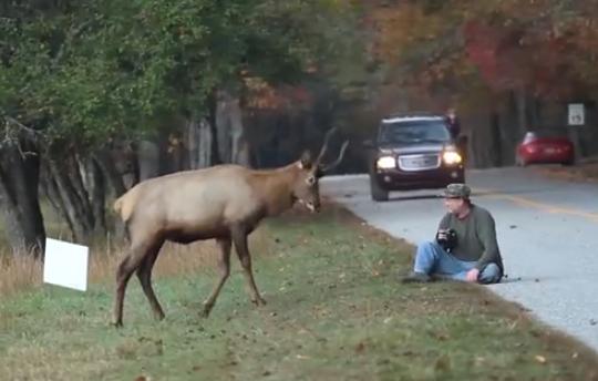 Un ciervo juega con un fotógrafo durante 5 minutos (vídeo)