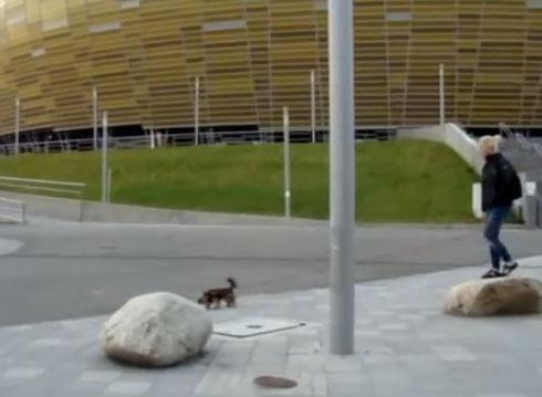 Un halcón intenta cazar a un perrito en plena ciudad