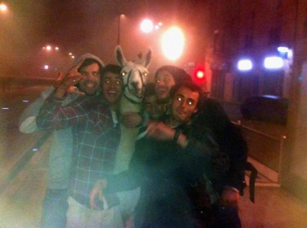 Unos adolescentes borrachos roban una llama en un circo y se la llevan de paseo en tranvía
