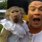 Mono imitando a su entrenador