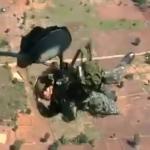 Paracaidista tailandés se queda enganchado al avión. Final trágico