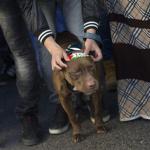 Un perro evita la violación de dos hermanas en Argentina