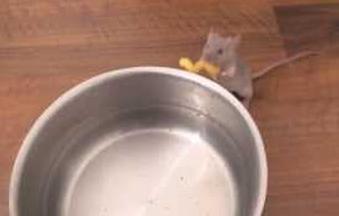 Un ratón ayuda en la cocina poniendo la pasta en el agua