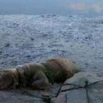 """Piden 11 meses de cárcel para un """"hombre"""" que ató a su perro a una piedra en la playa para que muriera ahogado"""