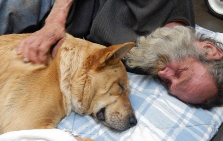Avalancha de donaciones para salvar al perro de un indigente que fue atropellado por un coche