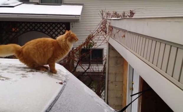 Gatito intentando subir al techo del garaje desde el coche nevado
