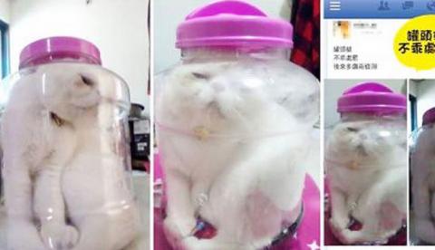 Una estudiante acusada de maltrato animal por meter a su gato dentro de un tarro de cristal para castigarlo por mal comportamiento